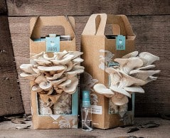 Grow your own mushrooms in as little as 10 days!