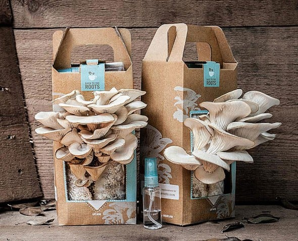 Back-to-the-Roots-Oyster-Mushroom-Kit-Grow-your-Own-Mini-Garden