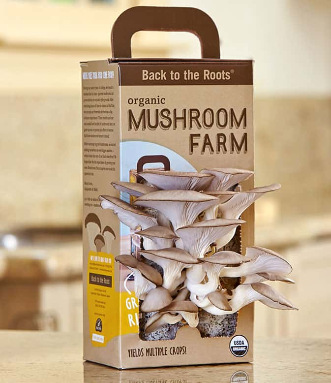 Back-to-the-Roots-Oyster-Mushroom-Kit-Love-Gardening