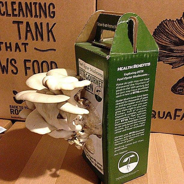 Back-to-the-Roots-Oyster-Mushroom-Kit-Mini-Garden-Kit