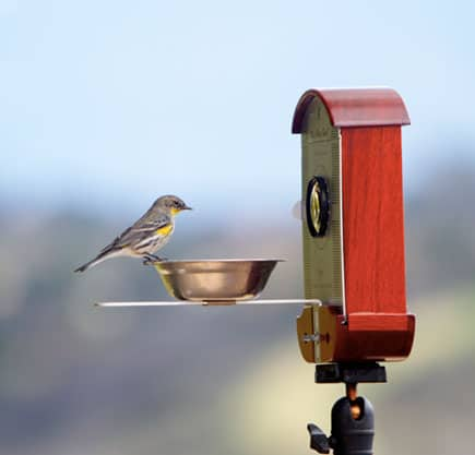 Bird-Photo-Booth-Animal-Watch