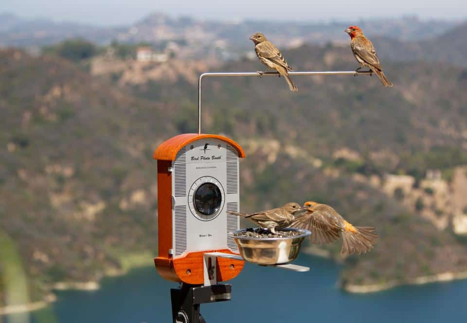 Bird Photo Booth Cool Patio Fixture