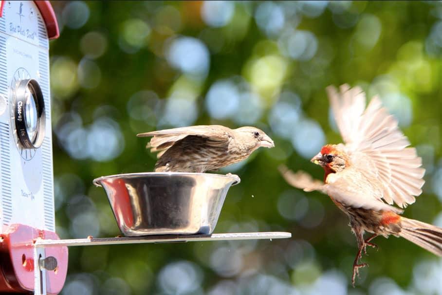 Bird-Photo-Booth-Cool-Summer-Hobby