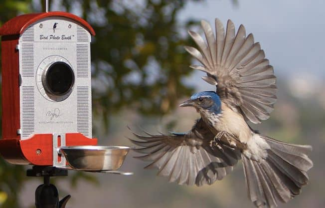A cool way to easily photograph birds.