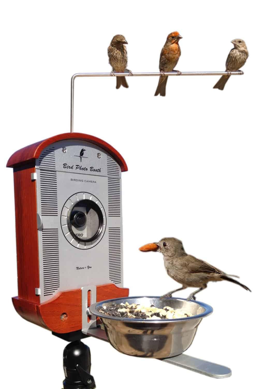 Bird Photo Booth Promo