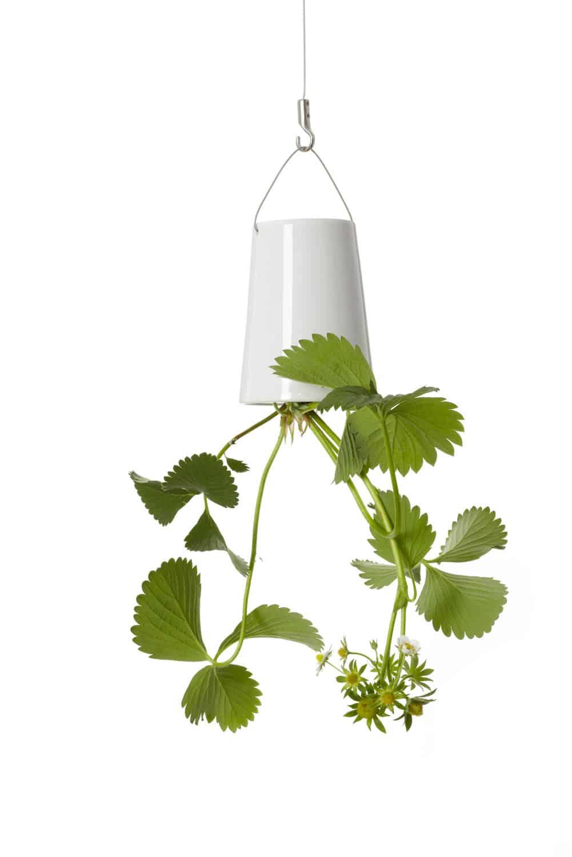 Boskke Sky Planter Indoor Plant