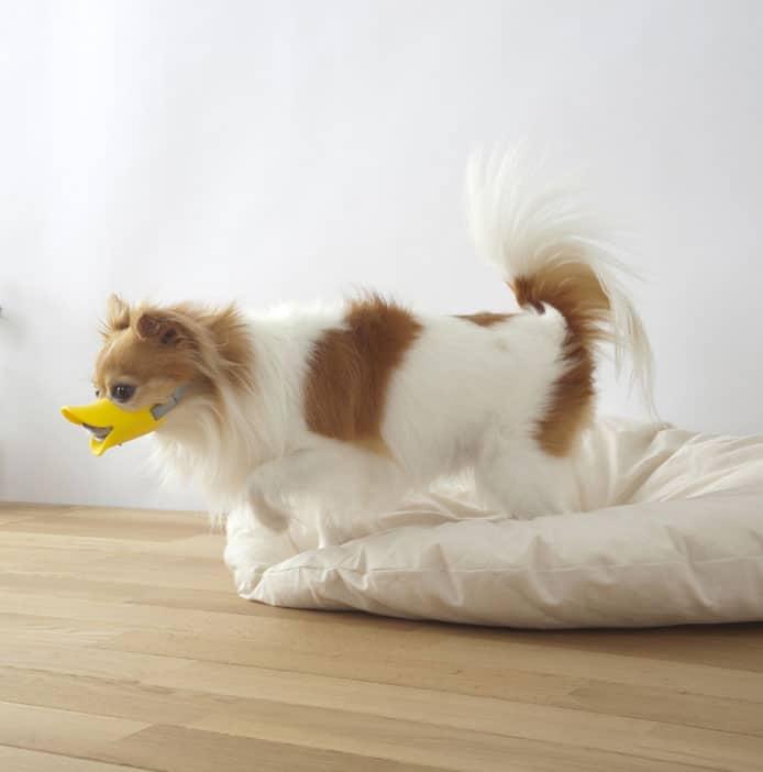 If it looks like a duck it's a dog.