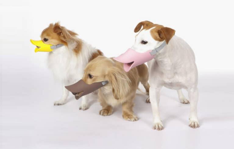 Duck Dog Muzzle Doggie Group Shot