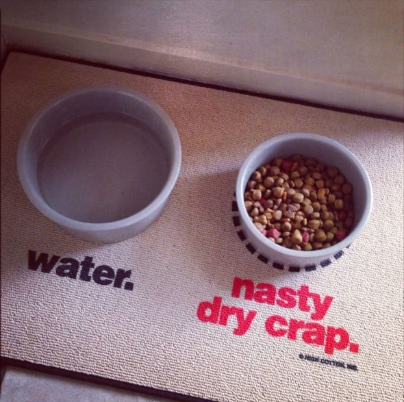 Water-and-Nasty-Dry-Crap-Mat-Pet-Gif Cool Suff to Buy