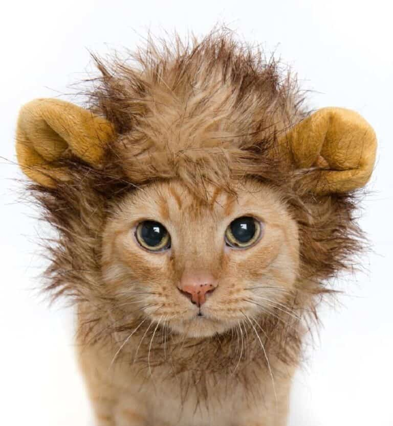 Cat Lion Mane Wig Costume Animal Party Must Have