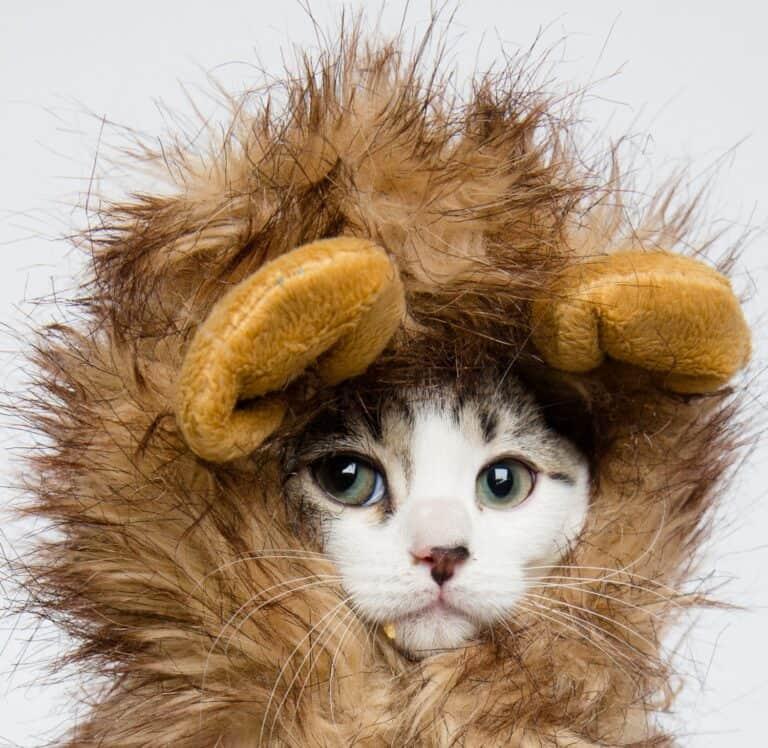 Cat Lion Mane Wig Costume Cute Pet Halloween Get Up