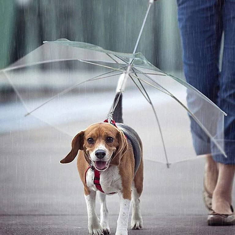 Dogbrella Transparent Dog Umbrella Cool Pet Accessory