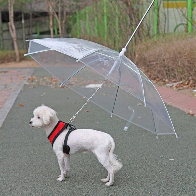 Dogbrella Transparent Dog Umbrella Weird Invention