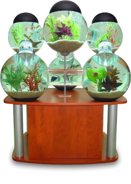 Labyrinth Aquarium Brown Shelf