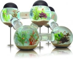 Create an underwater landscape in your abode.