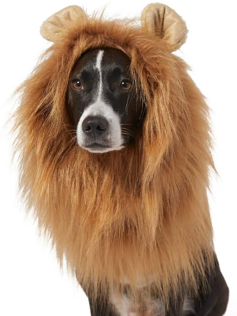Lion Mane Wig Dog Costume Animal Apparel