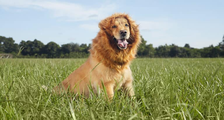 Lion Mane Wig Dog Costume Halloween Pet Apparel