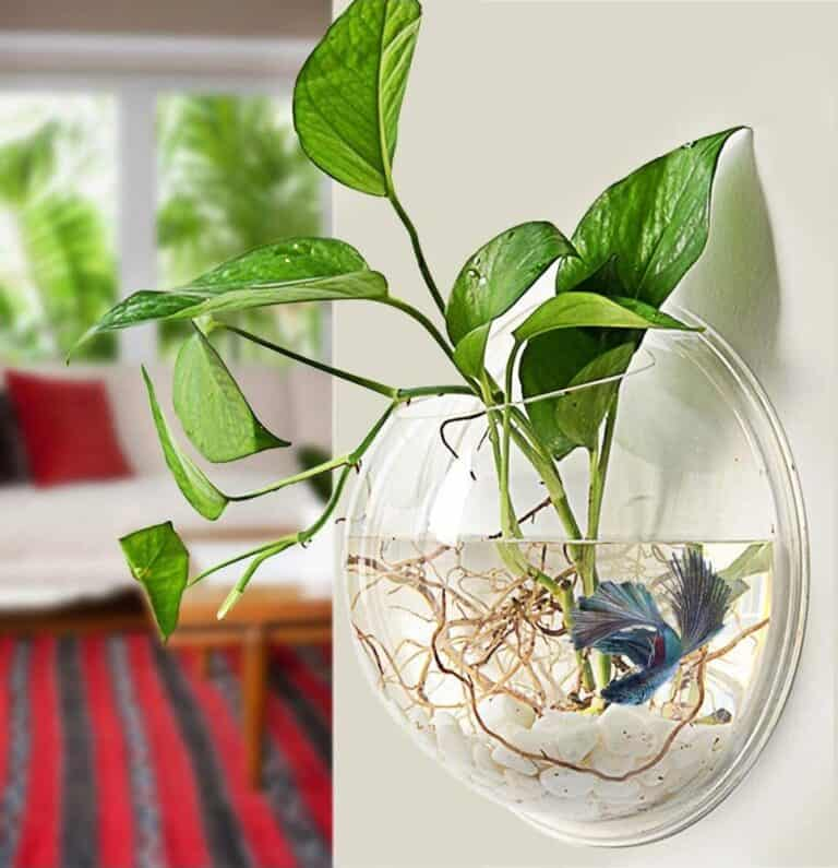 Wall Hanging Acrylic Fish Bowl House Warming GIft Idea