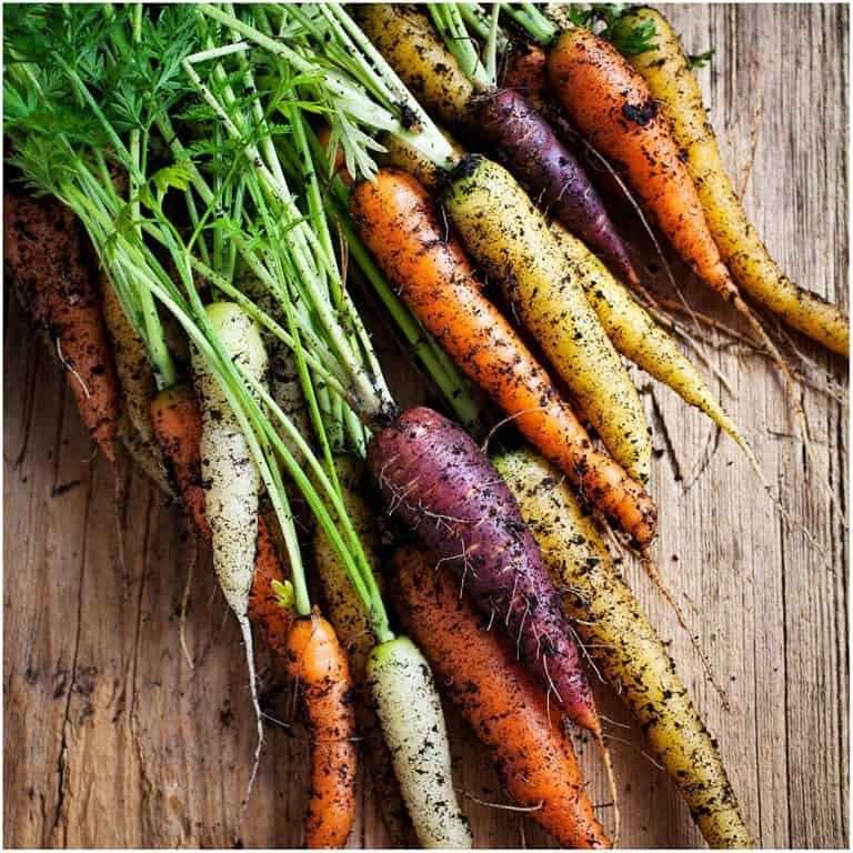 Carrot Rainbow Blend Seeds Exotic Vegetables