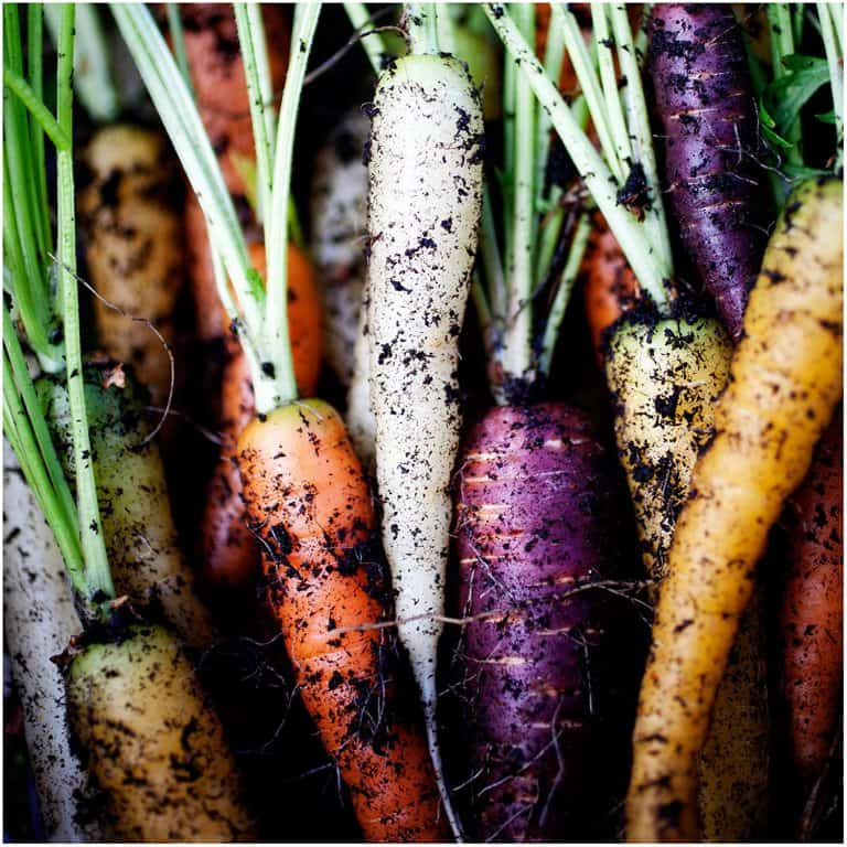 Carrot Rainbow Blend Seeds Weird Vegetables