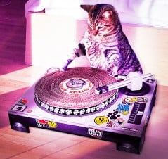 Watch the cool cat get into his groove!