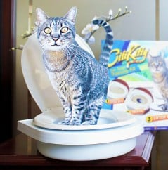 Teach your kitty how to use the toilet.