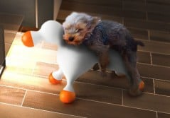 Sexy toy for trendy dogs.