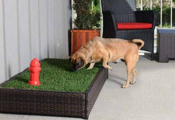 Porch Potty Premium Dog Grassy Litter Box Automatic Sprinklers with Red Fire Hydrant Dog Sniffing