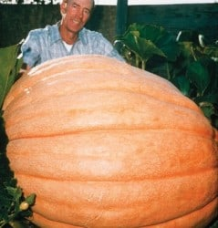 Pumpkin on steroids!