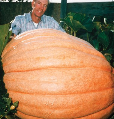 Pumpkin Dills Atlantic Giant Seeds Exotic Plants Halloween