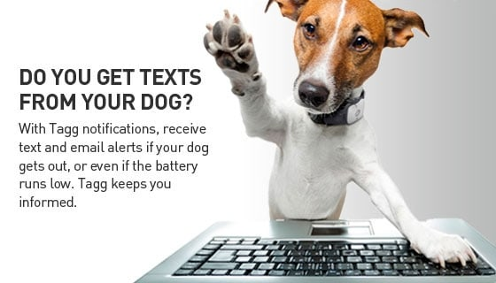 Tagg Dog & Cat Pet Tracker Text Promo