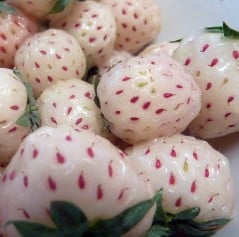 White strawberries, with a twist of pineapple!