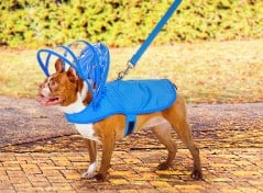 Keep your dog dry and retro futuristic!