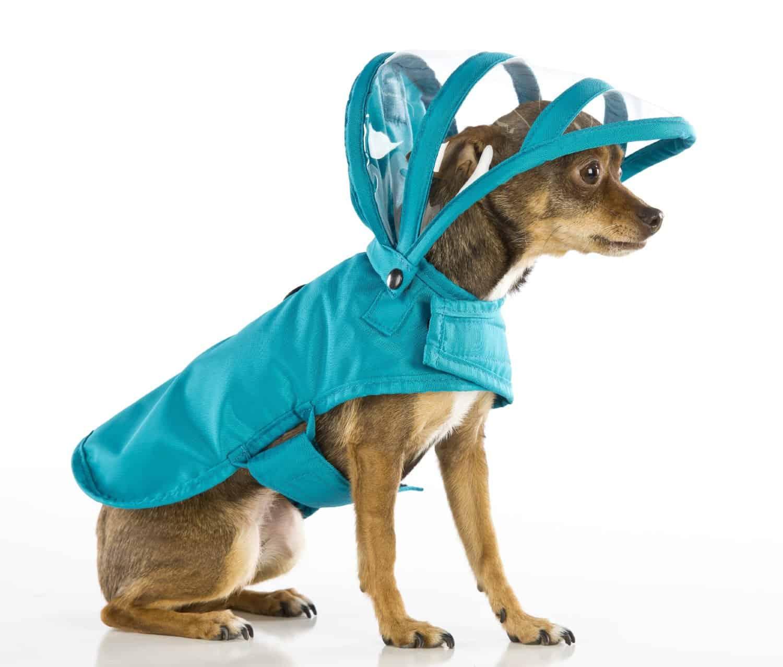 Push Pushi Rainbow Dog Raincoat Doglover Gift Cool Stuff to Buy Teal