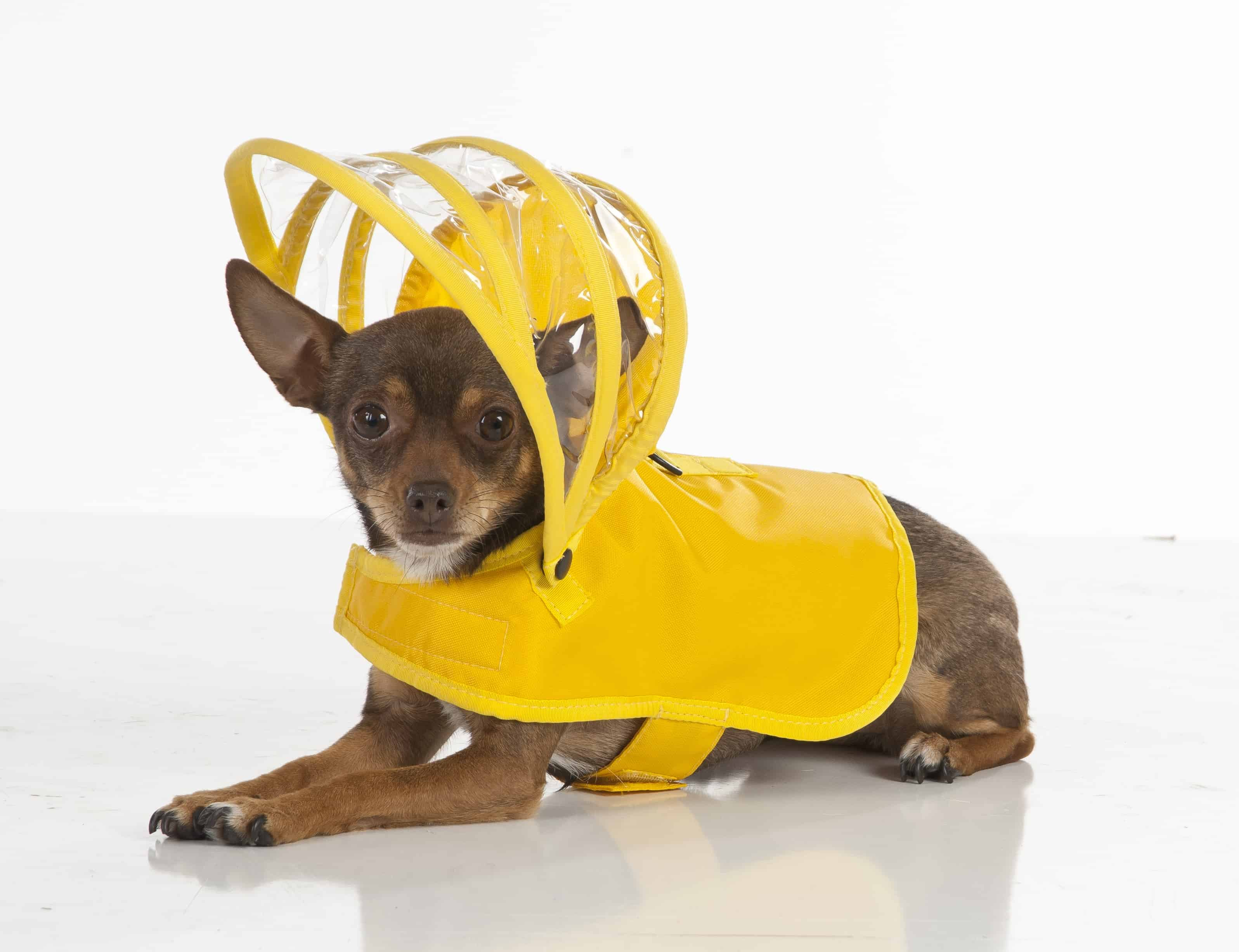 Push Pushi Rainbow Dog Raincoat Doglover Gift Cute Dog Bright Yellow