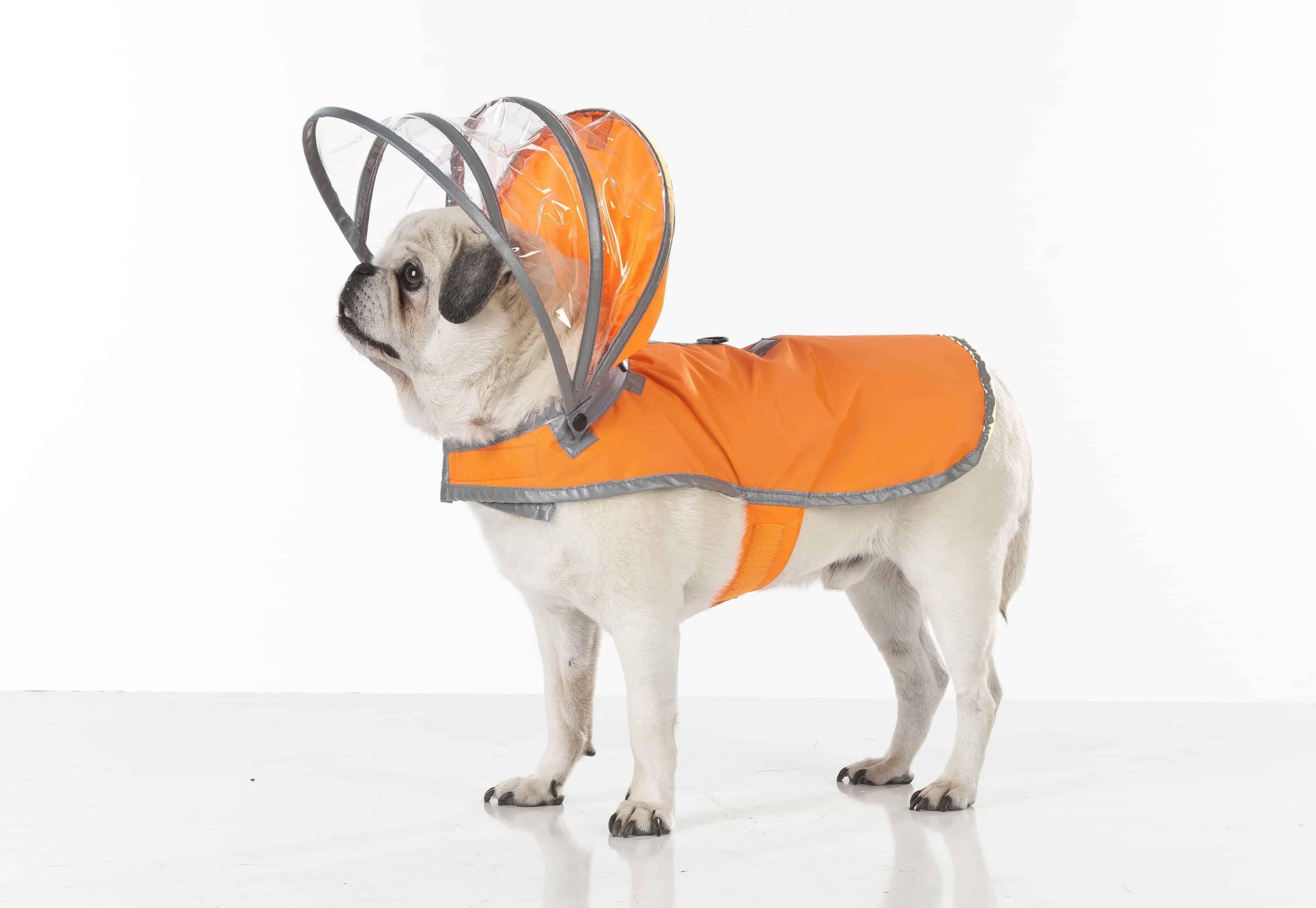 Push Pushi Rainbow Dog Raincoat Doglover Gift Reto Futuristic Bright Bright Orange
