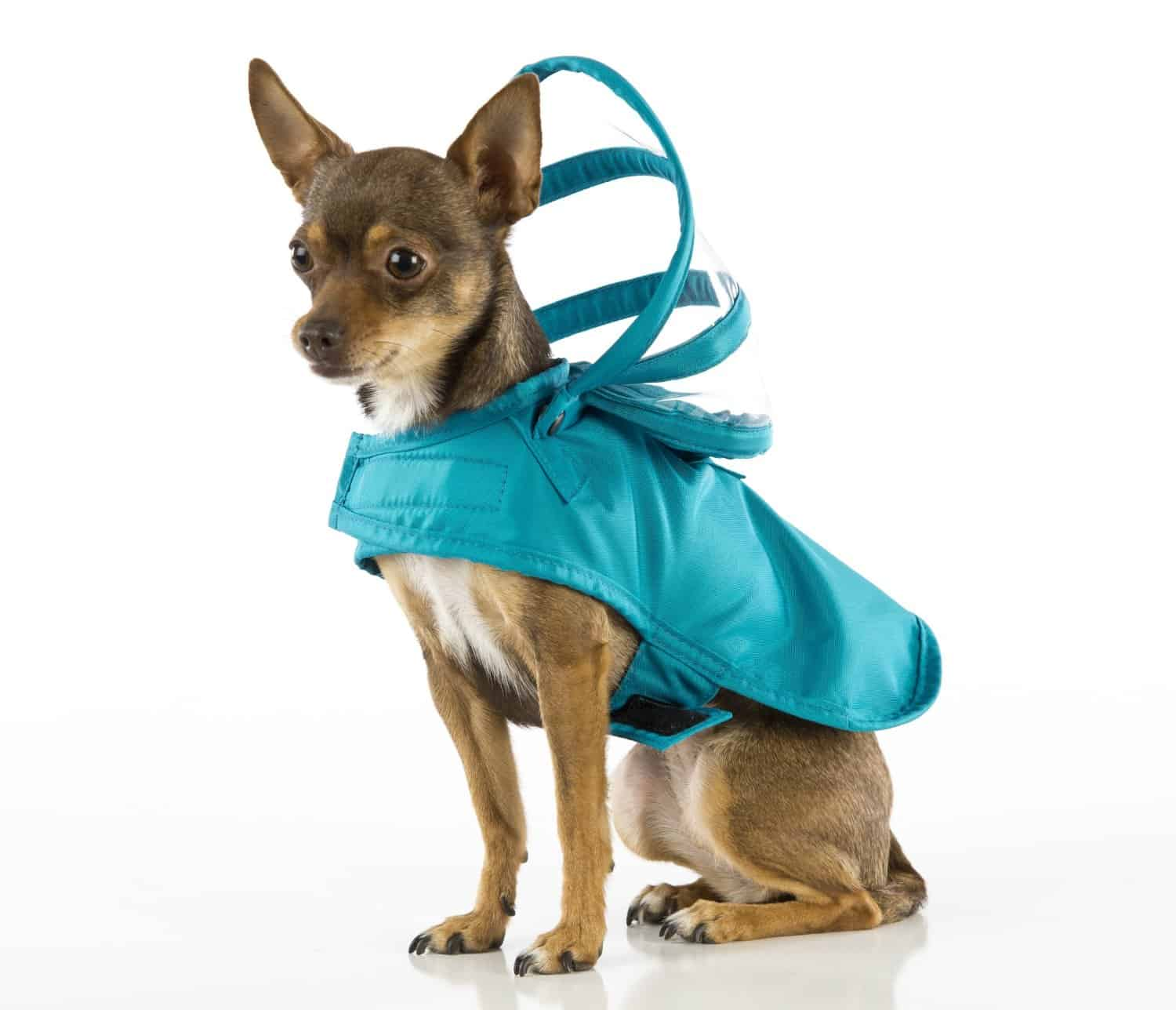 Push Pushi Rainbow Dog Raincoat Doglover Gift Teal Cute Dog Standing