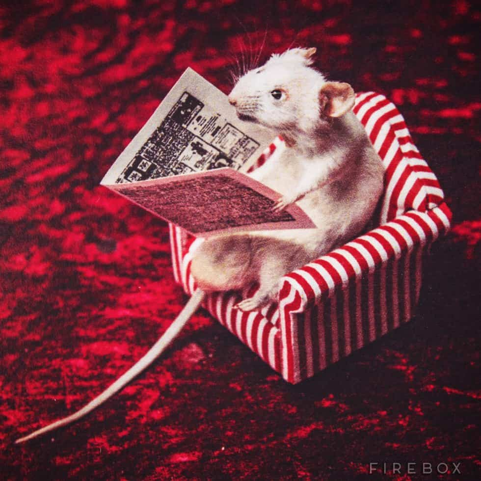 Mouse Taxidermy Kit Creepy Hobby Reading Newspaper on a striped Chair