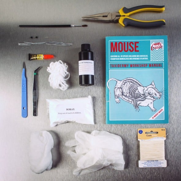 Mouse Taxidermy Kit Creepy and Cool Hobby
