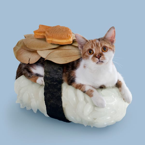 Sushi Cats by TandNPeanuts Fish Bread Out of This World Creature
