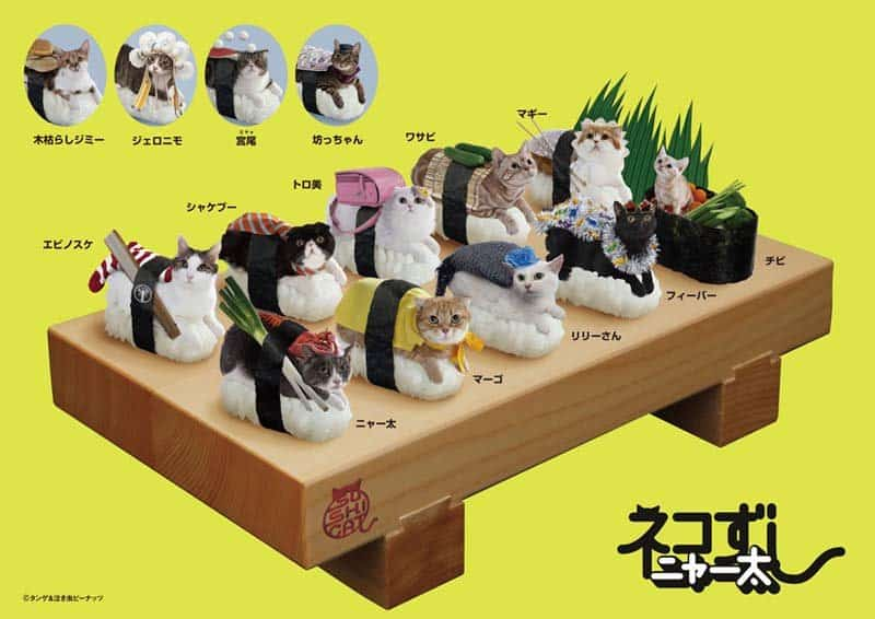 Sushi Cats by TandNPeanuts Gag and Gimmick in Japan