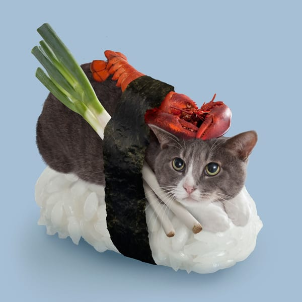 Sushi Cats by TandNPeanuts Onion Lobster Strange Creature