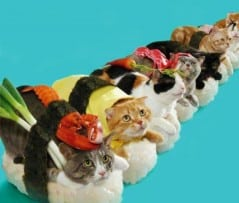Stay calm, sushi cats can smell fear.