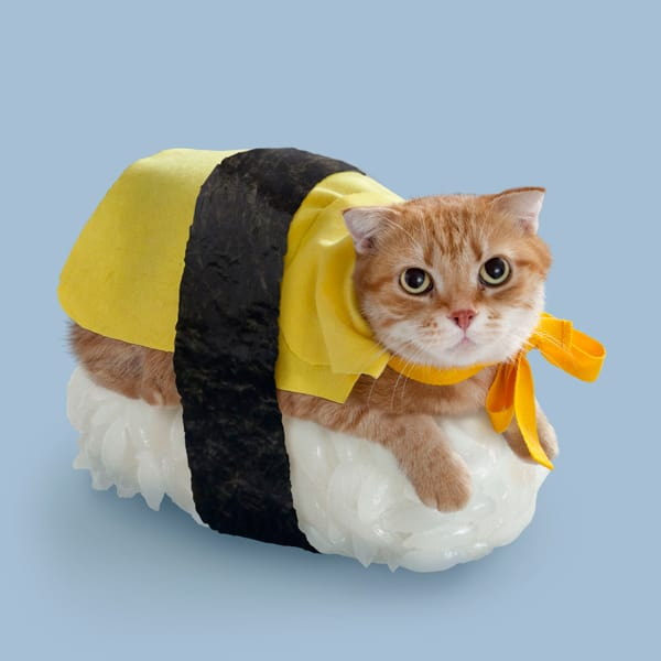 Sushi Cats by TandNPeanuts Yellow Egg Delight