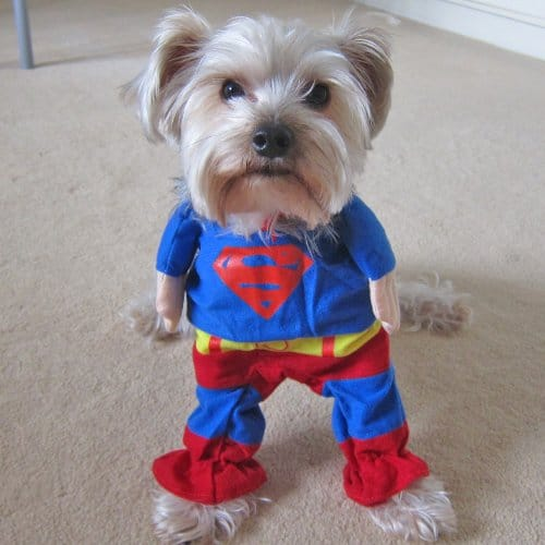 Alfie Pet Superhero Costume Superman Cute Dog