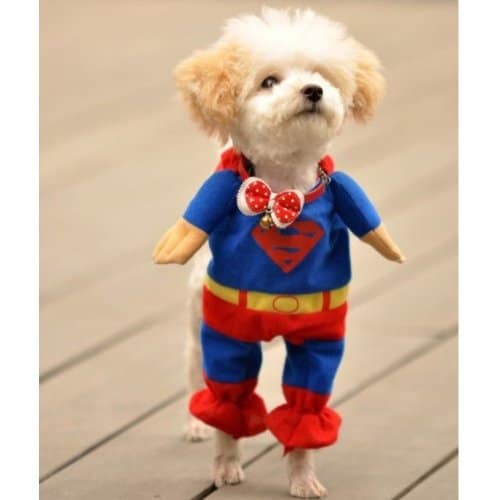 Alfie Pet Superhero Costume Superman Dog Cosplay