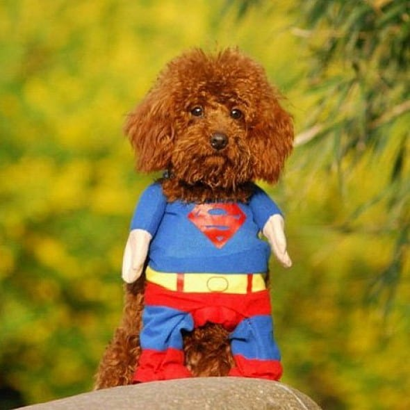 Alfie Pet Superhero Costume Superman Dog Costume