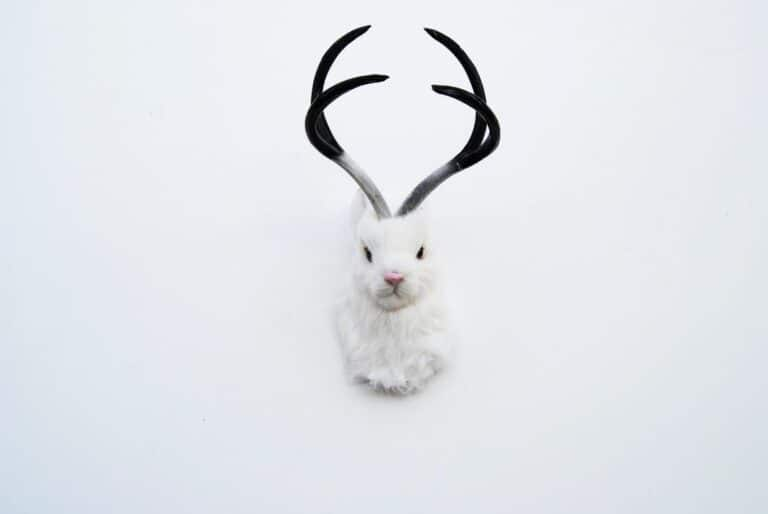 The Luiza White Jackalope Cool Faux Taxidermy