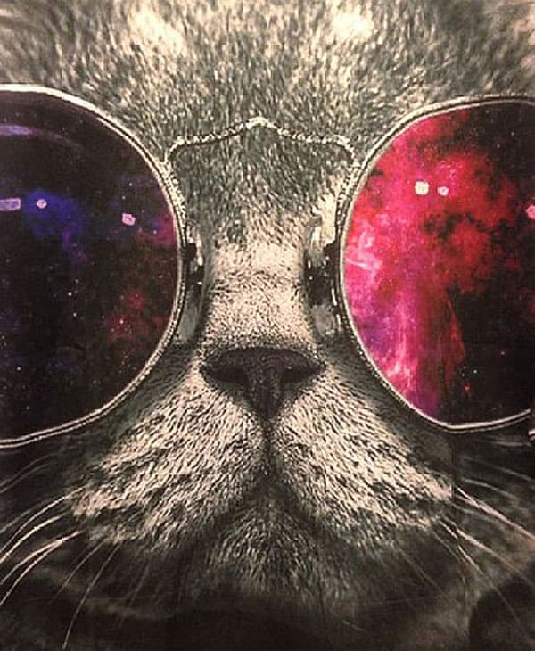 Show off the hipster cat in you.