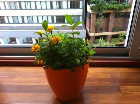 Greenbo Designer Railing Planter Cool Product